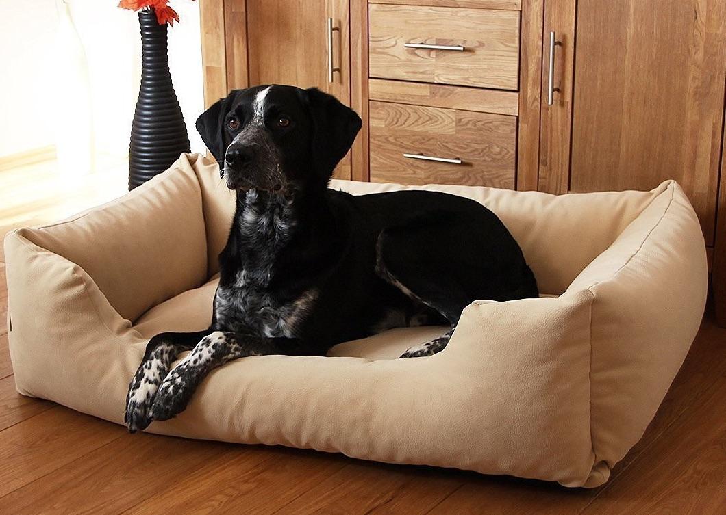 Ratgeber: Hundekorb & Hundebett