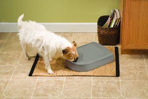 PetSafe Futterreservoir 5 Mahlzeiten Test